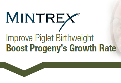 Improve Piglet Birthweight: Boost Progeny's Growth Rate