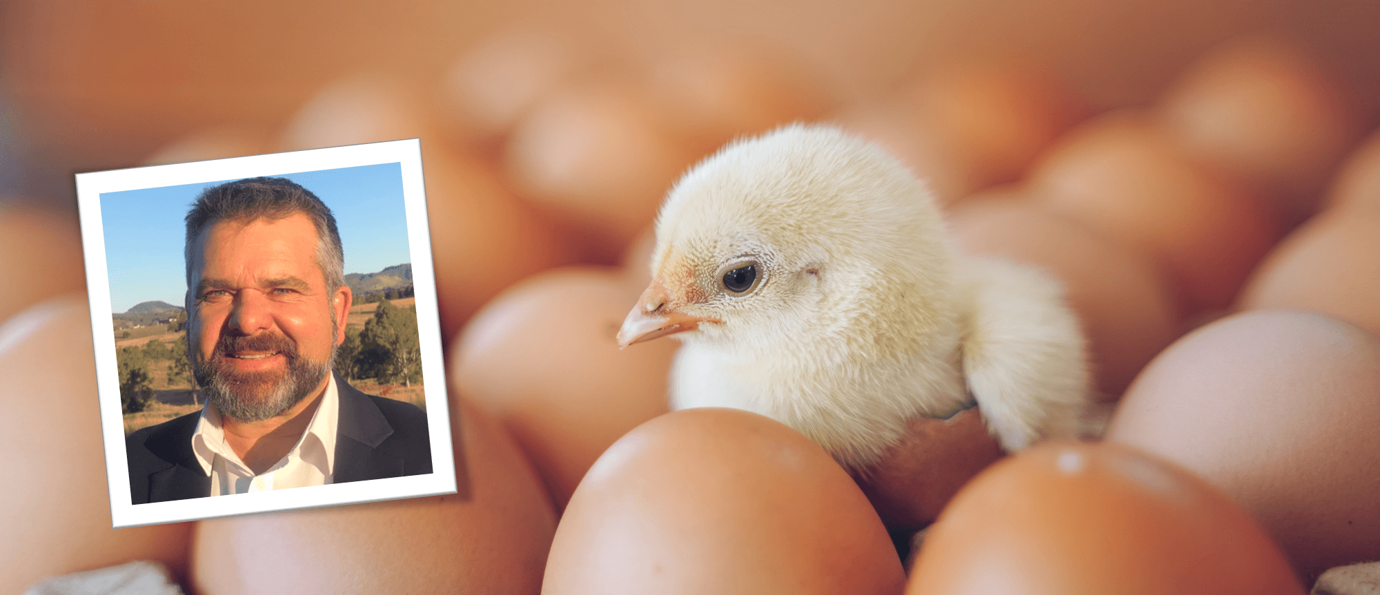 Improving broiler chick performance before they hatch