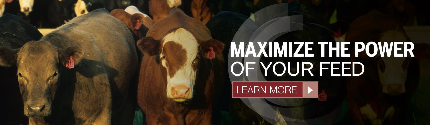 maximize the power of your feeds