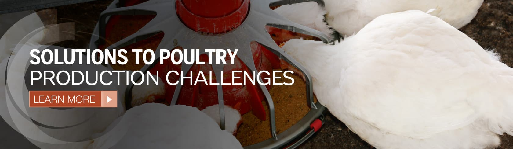 Solutions to poultry production challenges