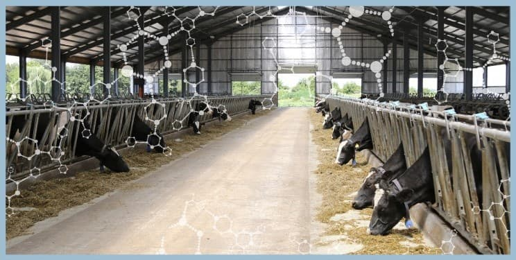 Sustainable animal agriculture cows